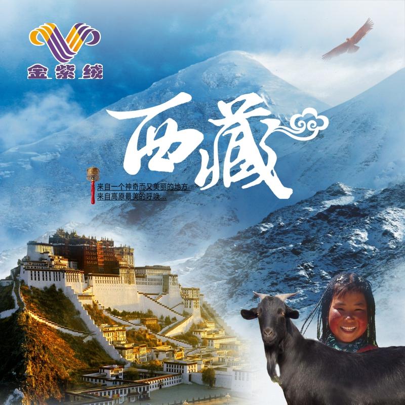 西藏高海拔阿里措勤 羊绒 160/kg
