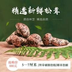 西藏特产林芝新鲜松茸首批5-7CM/500g精选未开伞全国顺丰包邮