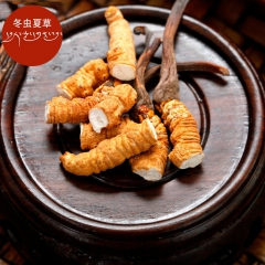 西藏曲水虫夏草4条/克纯野生正品虫草冬虫夏草