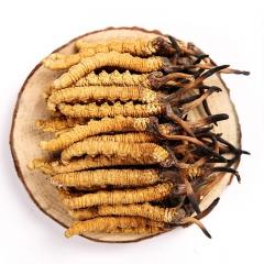 西藏林芝冬虫夏草西藏直供野生虫草 1300头500克